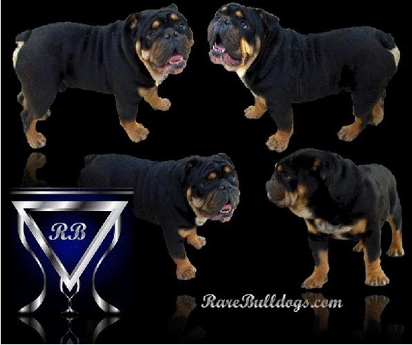 Rare Bulldogs Misc. Pics