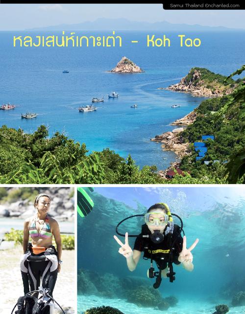 Floder 4 KOH TAO  เกาะเต่า