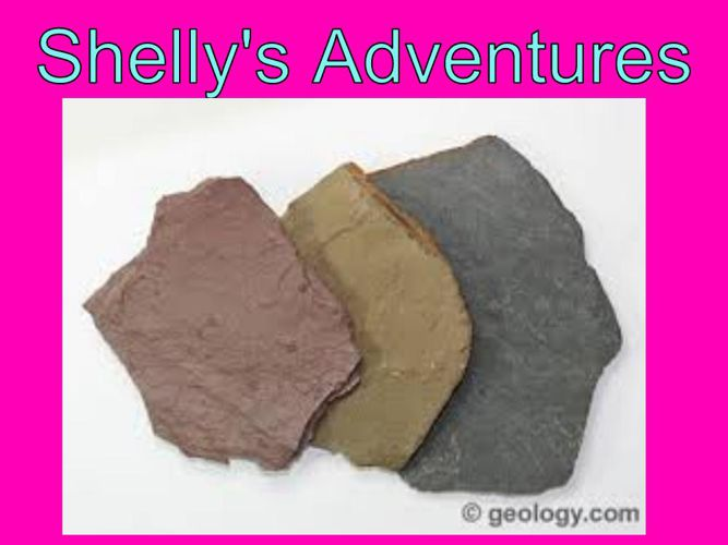 Shelly's Adventures