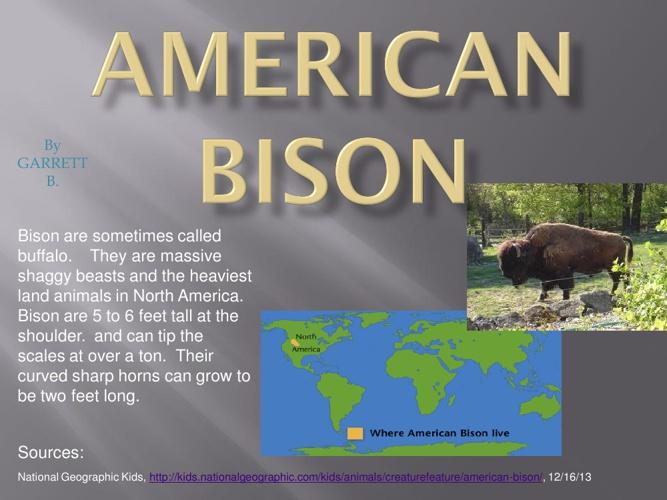 American Bison by: Garret B