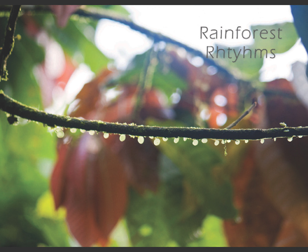 Rainforest Rhythms
