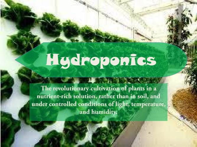 Hydroponics-DivyaJyothi-IX-C