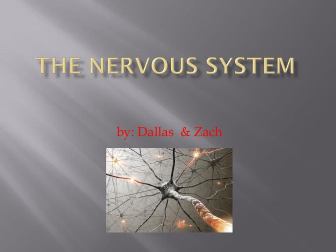 Dallas Zach Nervous System