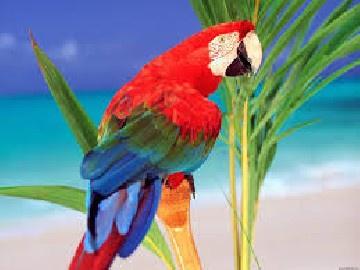 Parrot Flip