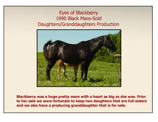 Blackberry & Offspring Foal Archive