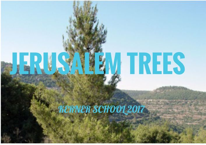 Jerusalem trees