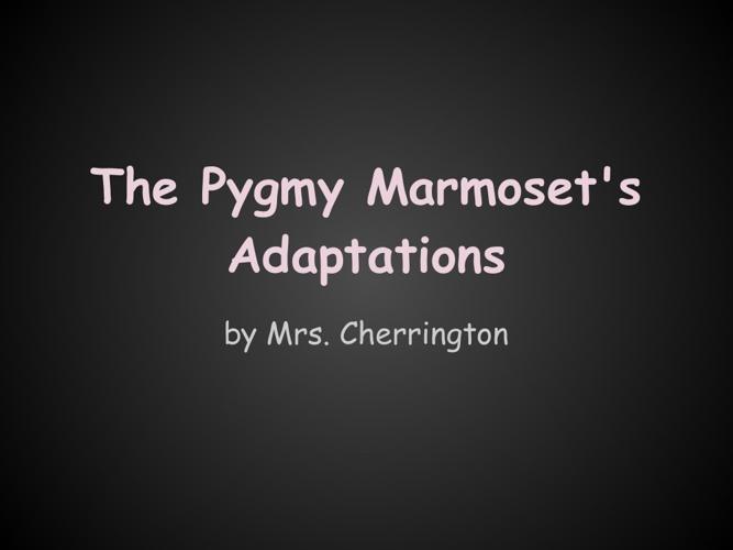 Pygmy Marmoset's Adaptations