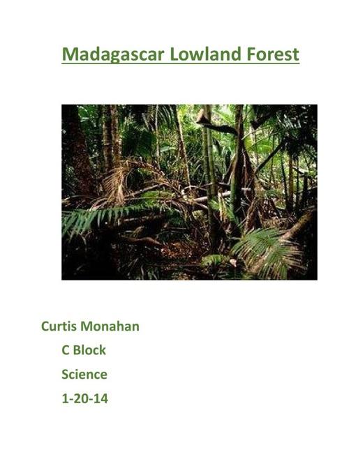 Madagascar Lowland Forest