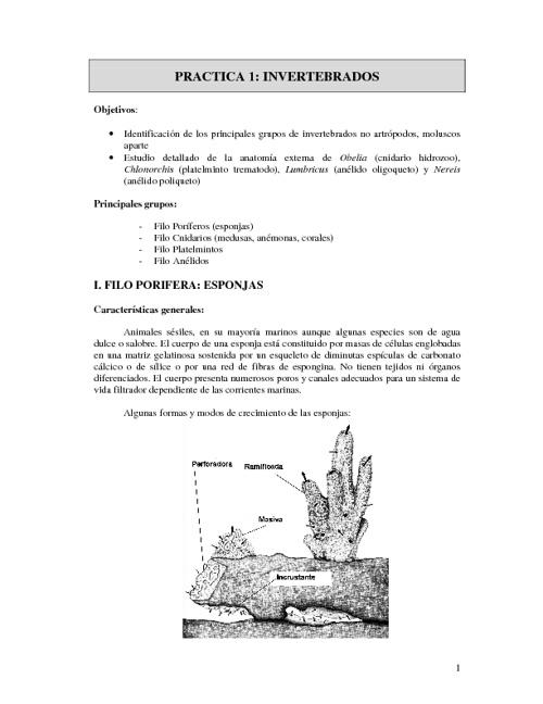 Cuaderno de prácticas de laboratorio de invertebrados