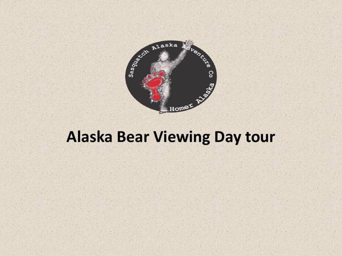 Alaska Bear Viewing Day tour