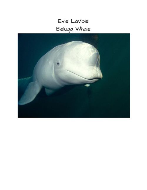 Beluga Book Project #2