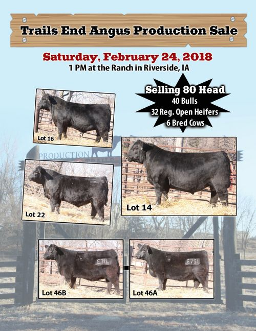 Trail's End Angus Production Sale