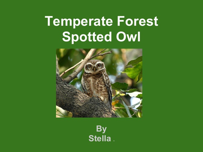 Stella spotted owl
