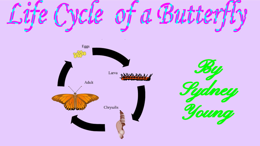 The Life Cycle of a Butterfly -