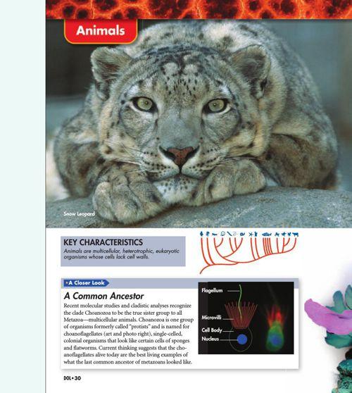 Invertebrate Guide