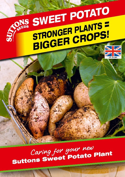 Suttons Sweet Potato Plant Growing Guide