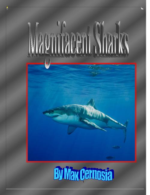 Max - Sharks