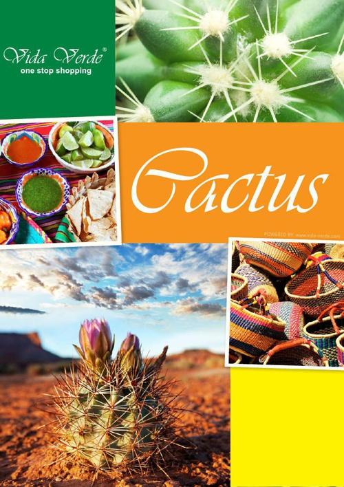 Cactus Brochure