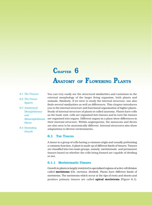 Ch 6. Anatomy of flowering plants