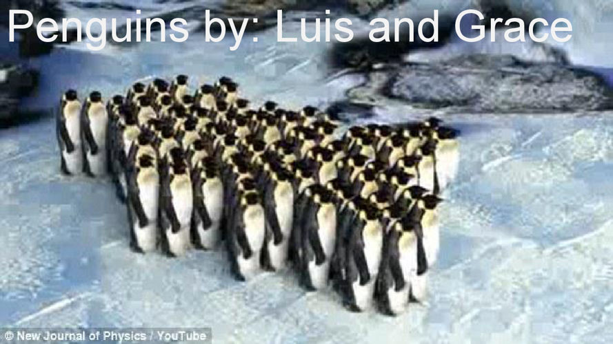 Penguin by- Luis and Grace