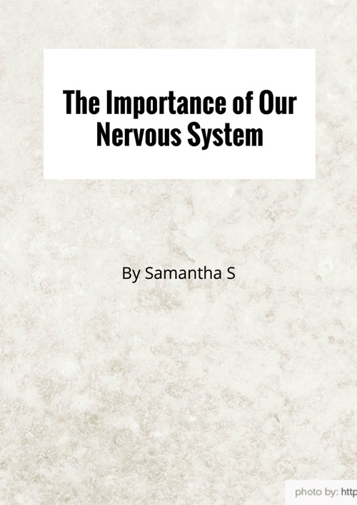 The Importance of Our Nervous System!
