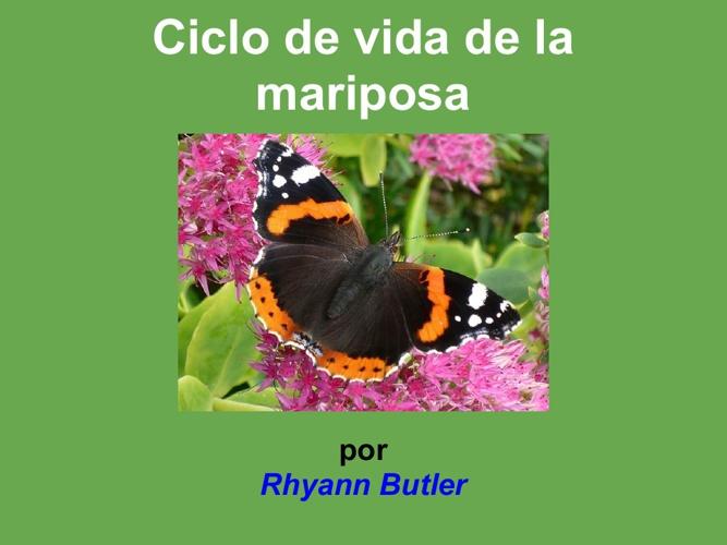 Rhyann mariposa maravillosa