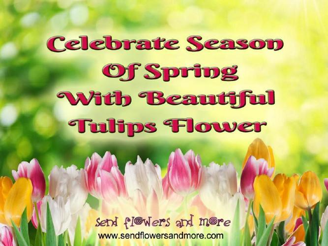 Online Beautiful Tulips Flower Bouquet