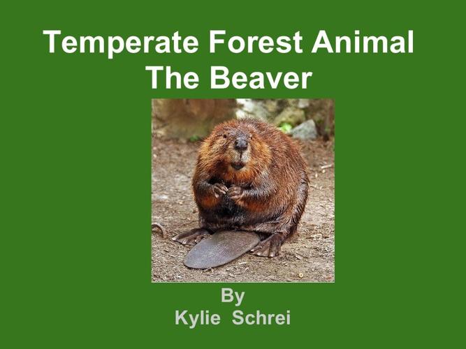 Kylie beaver