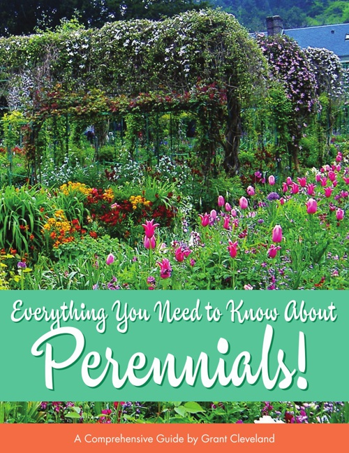 Everything You Need to Know About Perennials!