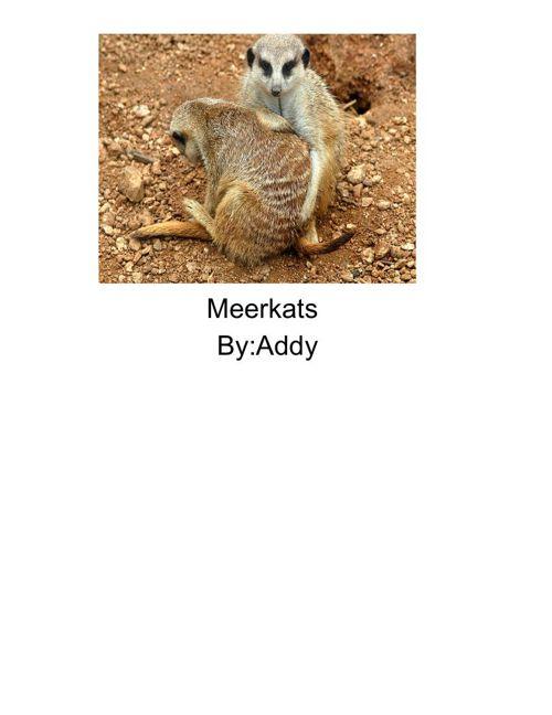 Meerkat Book
