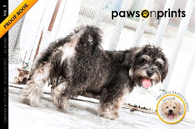 The Chia Family's Dogs