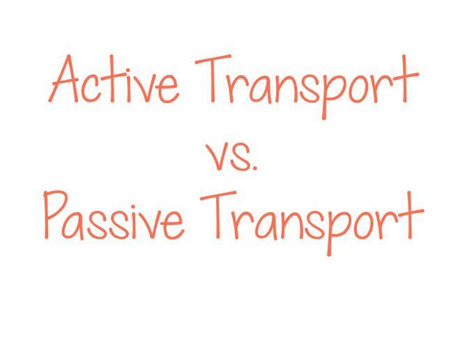 Active Transport vs. Passive Transport