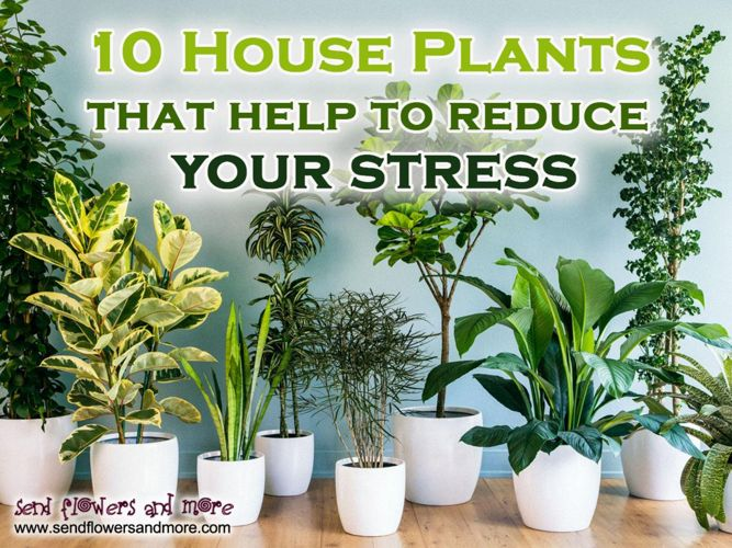 10 House Plants that help to reduce your stress