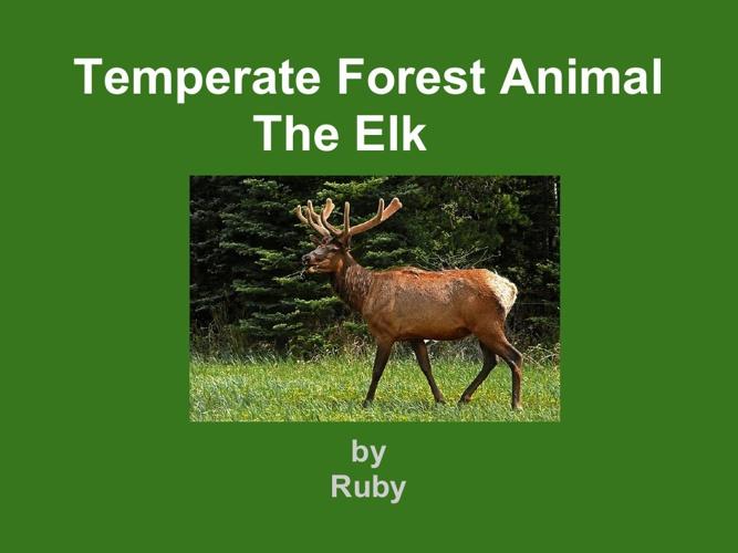 Ruby Elk