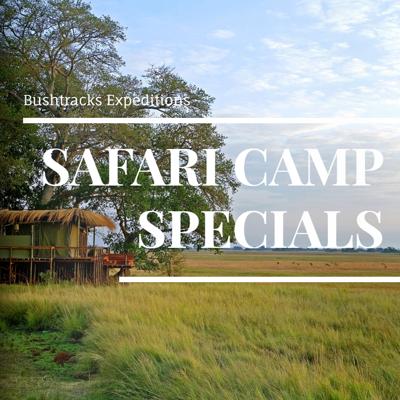 Bushtracks Safari Camp Specials 2017