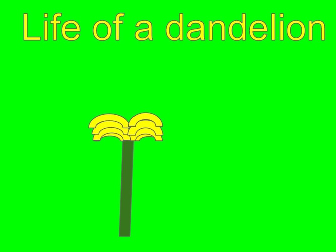 Life of a Dandelion
