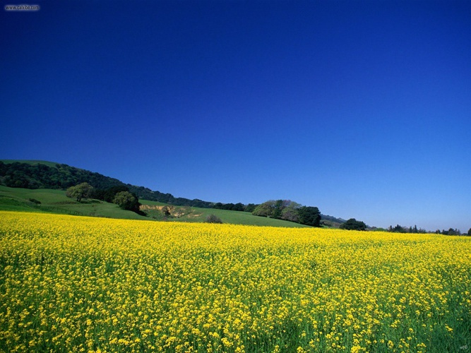 Landscapes__Wild_Flower_Field_California
