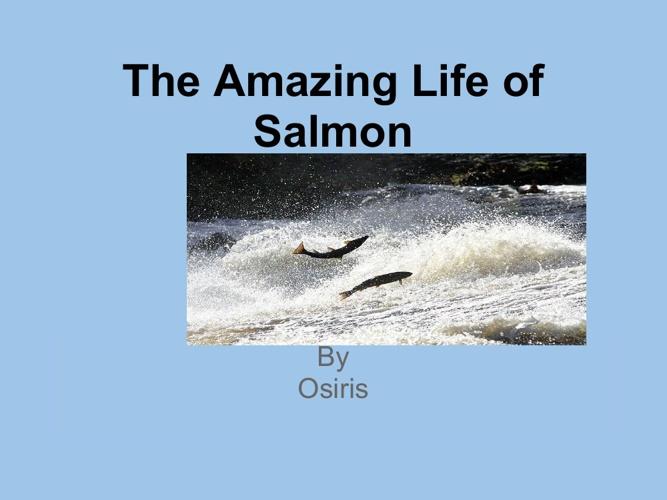 New FlipThe Amazing Life of Salmon