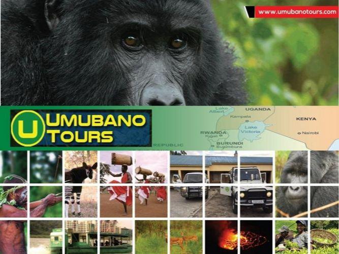 Gorilla safari Bwindi