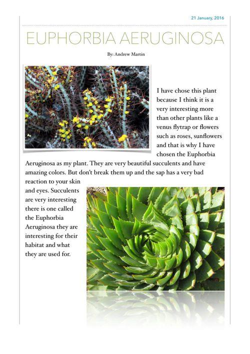 Euphorbia Aeruginosa 1