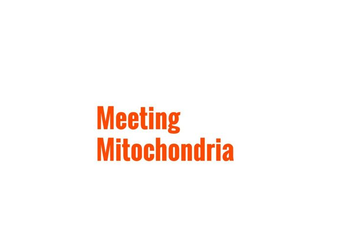 Meeting Mitochondria