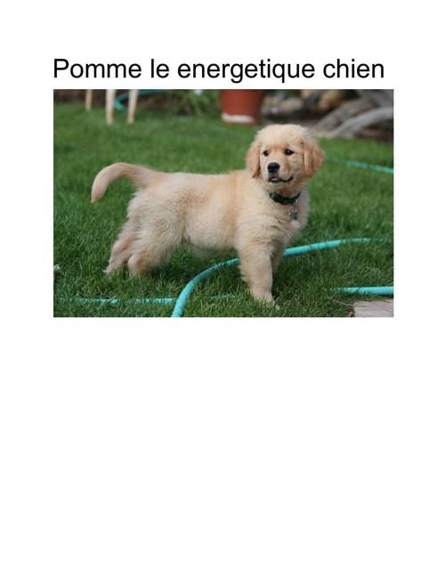 Pomme le energetique chien