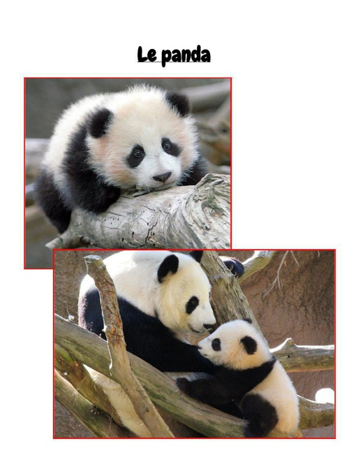 Panda French Book