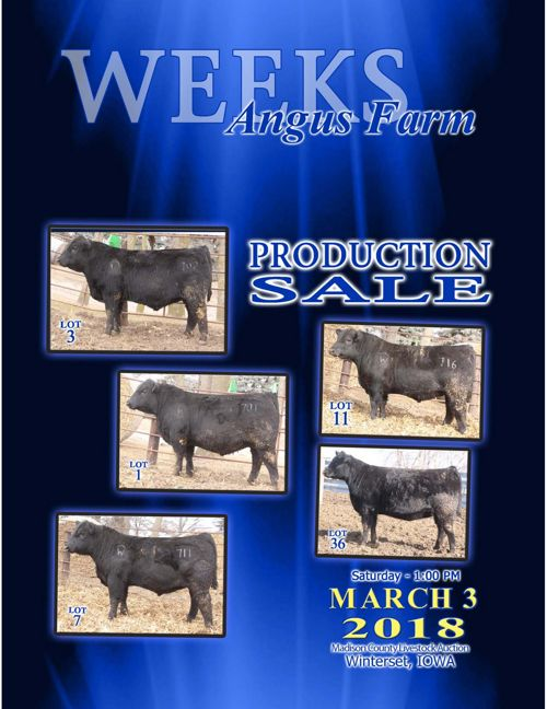 Weeks Angus Farm Production Sale