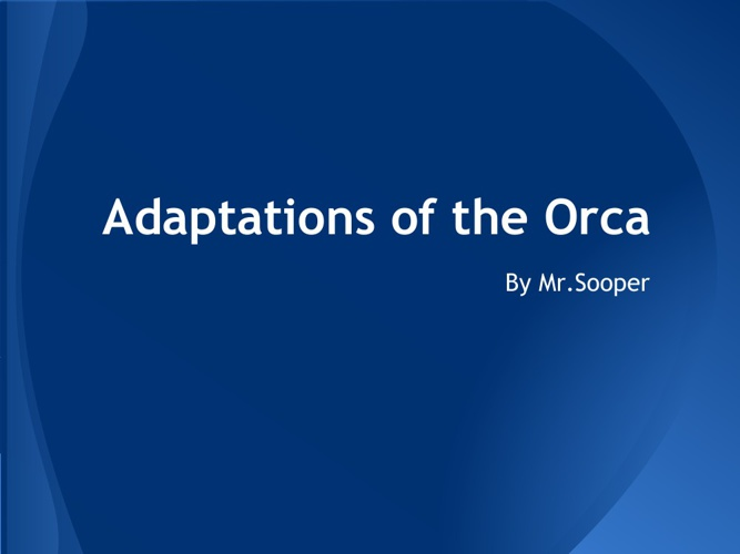 Orca Adaptations (1)