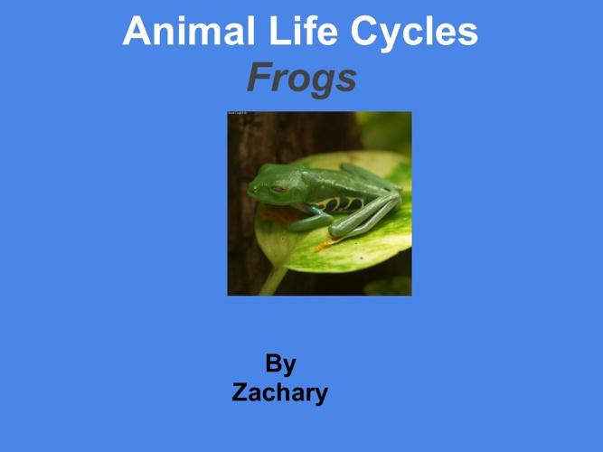 zach frog