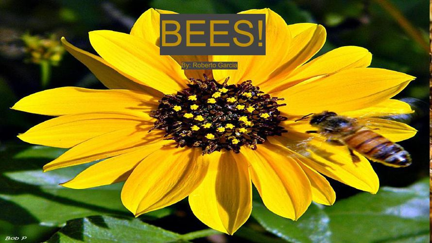 BEES! 3.0