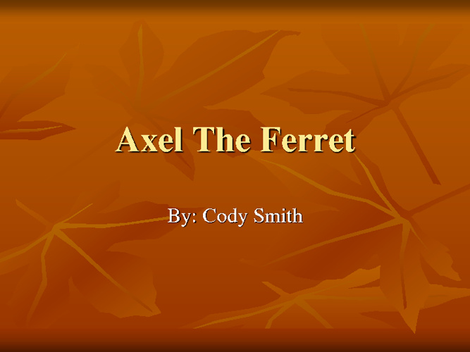 Axel The Ferret