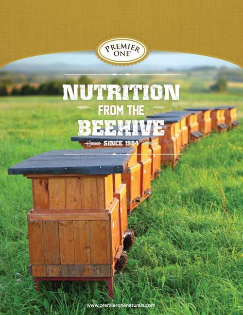 Brand Brochures - Beehive