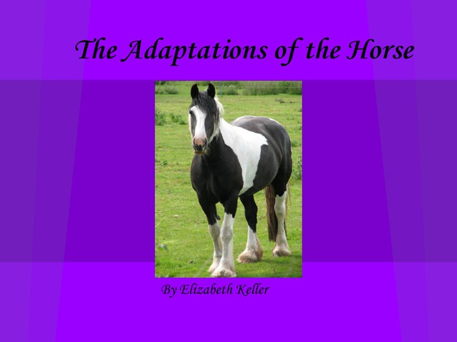 The Adaptation Of The Horse